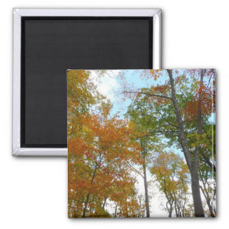 Looking Up to Fall Leaves I Colorful Fall Foliage Square Magnet