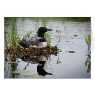 Loon on nest. card