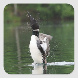 Loon Stickers