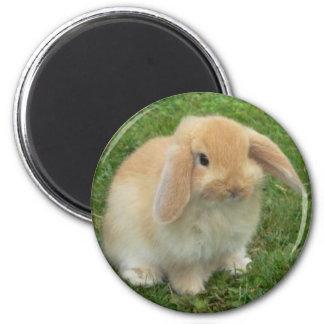 lop 6 cm round magnet