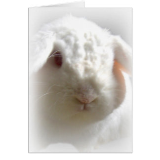 Lop-Eared Albino Easter Bunny Greeting Card