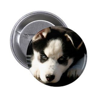 Lop Eared Siberian Husky Sled Dog Puppy 2 Pinback Button