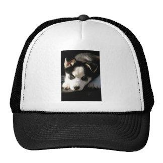 Lop Eared Siberian Husky Sled Dog Puppy 2 Cap
