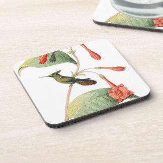 Lophornis Hummingbird Bird Wildlife Flower Coaster