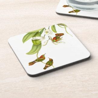 Lophornis Hummingbirds Wildlife Flowers Coaster