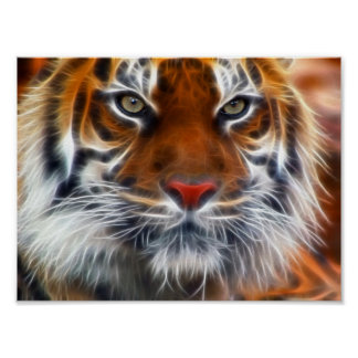 Lord of the Indian Jungles, The Royal Bengal Tiger Poster