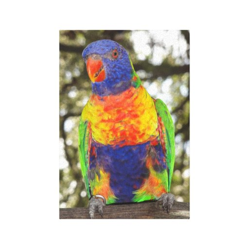 Lorikeet Canvas Stretched Canvas Prints