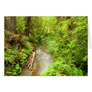 Lost Man Creek II at Redwood National Park Card
