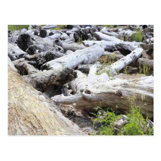 Lots of Driftwood Postcard