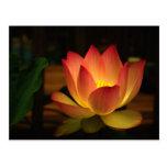Lotus 1 postcard