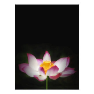 lotus_7751V.jpg Photographic Print