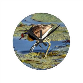 LOTUS BIRD RURAL QUEENSLAND AUSTRALIA WALLCLOCKS