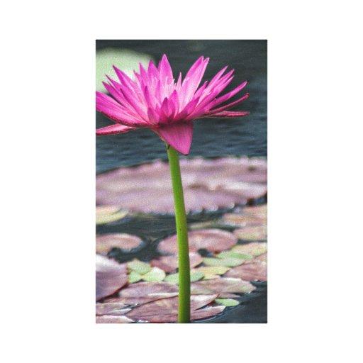 Lotus Blossom Canvas Prints
