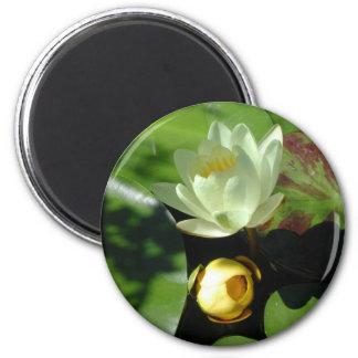 Lotus Blossom Magnet