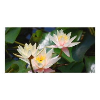 Lotus flower and meaning personalized photo card