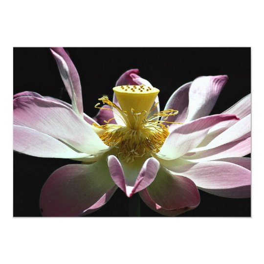 Lotus flower card