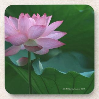 Lotus flower coasters
