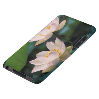 Lotus flower in blossom, China iPod Touch Case-Mate Case