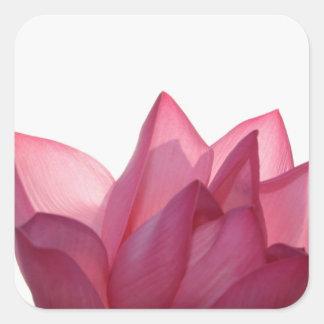 Lotus flower [Nelumbio speciosum] in full Square Sticker