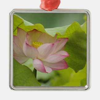 Lotus flower, Nelumbo nucifera, China Silver-Colored Square Decoration