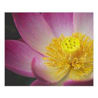 lotus flower photo print