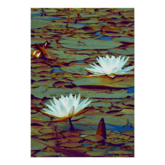 Lotus Flowers Poster Poster
