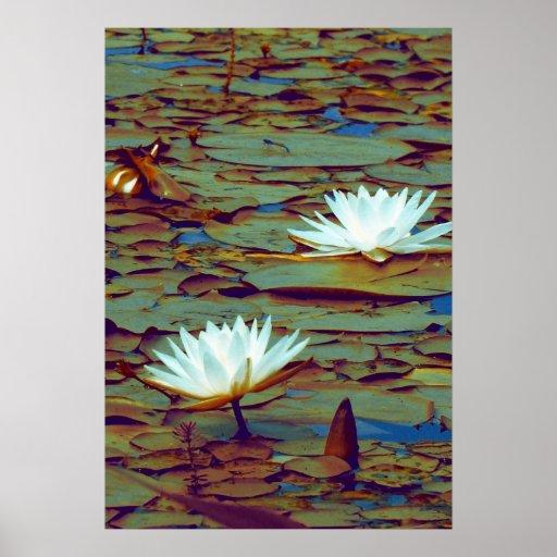 Lotus Flowers Poster Poster