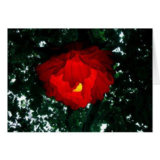 Lotus Lantern Cards