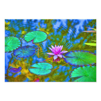 Lotus Lily Pad Water Lily in an Italian Garden Photo Print