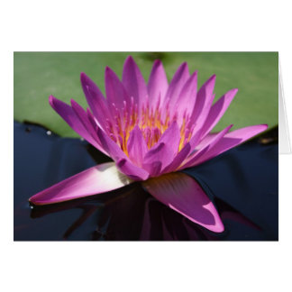 Lotus Notecard