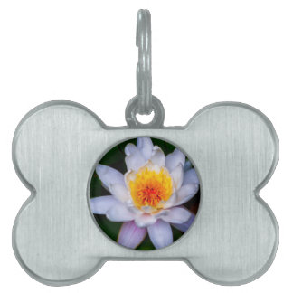 lotus pet ID tags