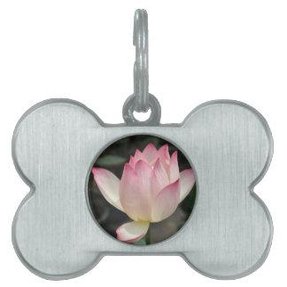 lotus pet tags