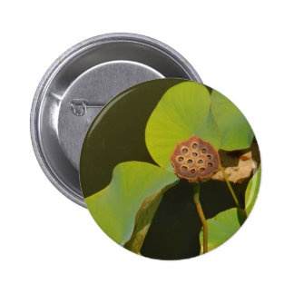 Lotus Pod and Lilly Pad Buttons