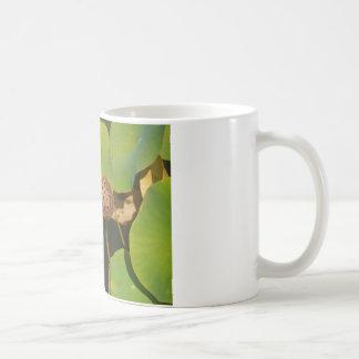 Lotus Pod and Lilly Pad Basic White Mug