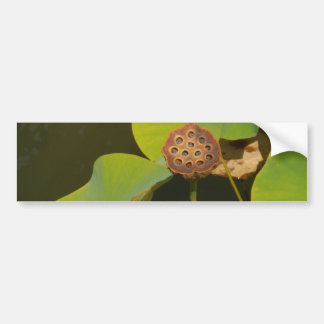 Lotus Pod and Lilly Pad Bumper Stickers