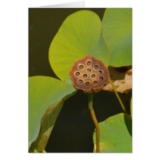 Lotus Pod and Lilly Pad Card