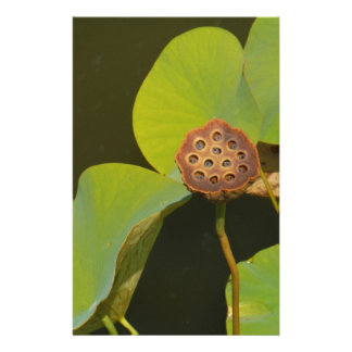 Lotus Pod and Lilly Pad Customised Stationery
