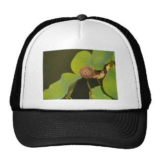 Lotus Pod and Lilly Pad Mesh Hat