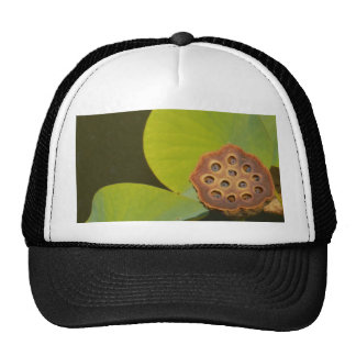 Lotus Pod and Lilly Pad Trucker Hats