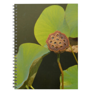 Lotus Pod and Lilly Pad Journals