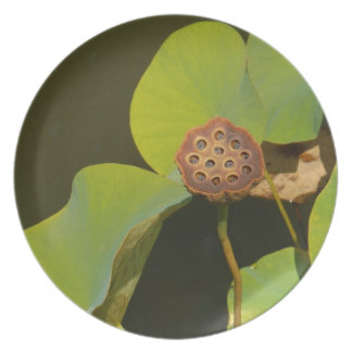 Lotus Pod and Lilly Pad Dinner Plates