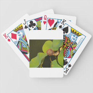Lotus Pod and Lilly Pad Playing Cards