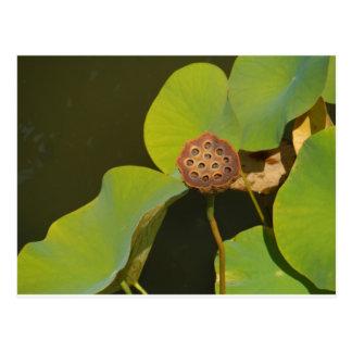 Lotus Pod and Lilly Pad Postcard
