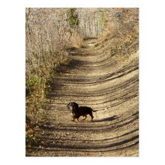Louie the Dachshund Walking in the Autumn Postcard