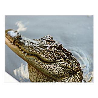 Louisiana Alligator postcard