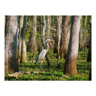 Louisiana Bird in Swamp Poster
