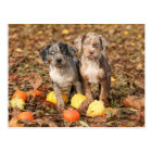 Louisiana Catahoula Puppies With Pumpkins Postcard