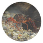 Louisiana Crawfish Plate