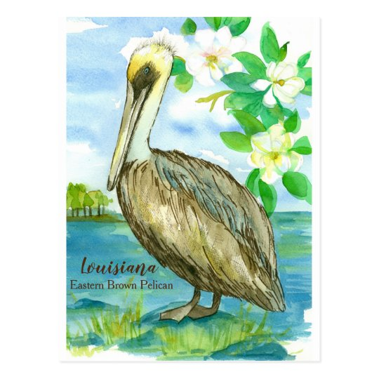 Louisiana Eastern Brown Pelican State Bird Postcard