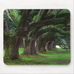 LOUISIANA LIVE OAK TREES MOUSEPADS